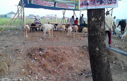 Penjual hewan kurban yang jujur