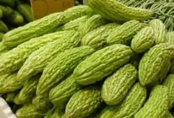 Manfaat sehat buah pare, memiliki khasiat apa buah pahit ini?